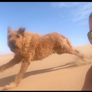 Lie down boarding with a dog in Namibia